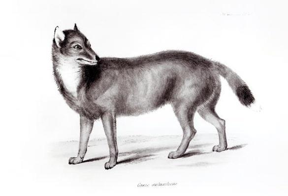 Canis Antarcticus