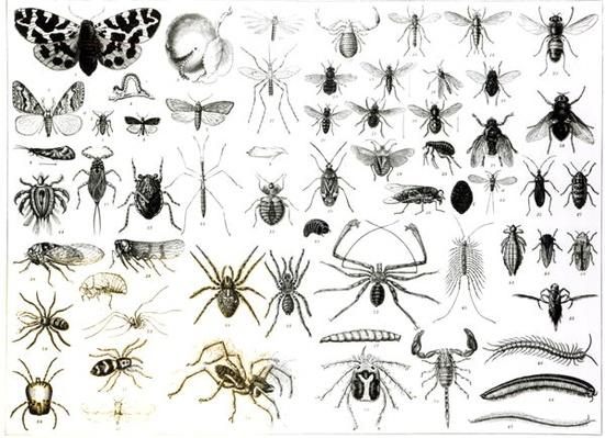 Entomology, Myriapoda and Arachnida