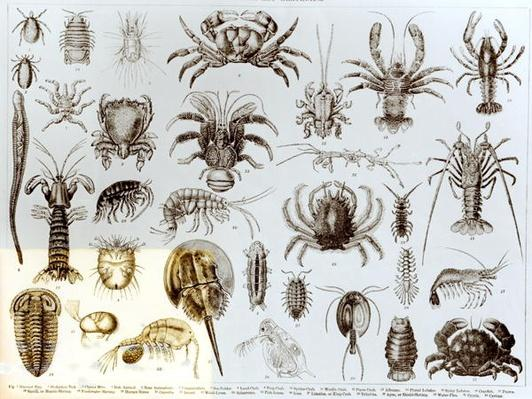 Crustacea and Arachnida
