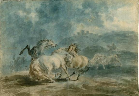 Horses Fighting