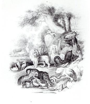 Wild Animals from 'A History of the Earth and Animated Nature' by Oliver Goldsmith, London, 1840