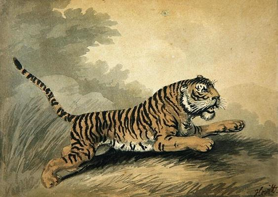 A Tigress leaping to the right, 1807