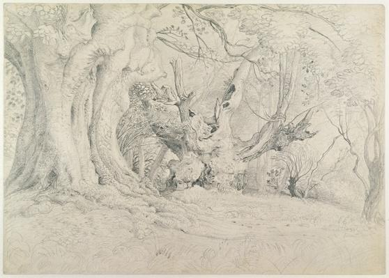 Ancient Trees, Lullingstone Park, 1828