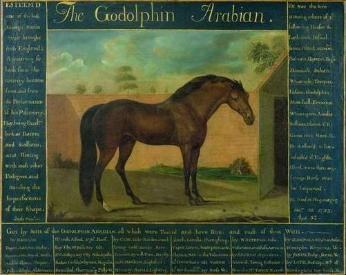 The Godolphin Arabian