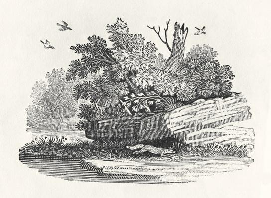 Fox escaping, from 'The General History of Quadrupeds', published 1790