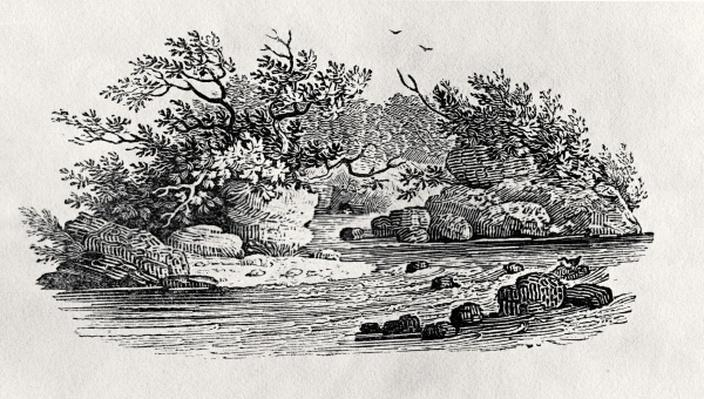 A bend in the river, from 'Water Birds', published 1804