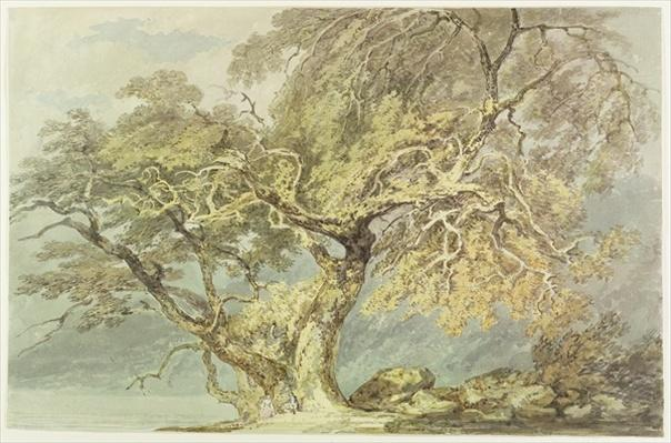 A Great Tree, c.1796