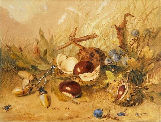Still Life with Acorns and Horse Chestnuts