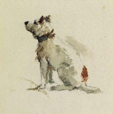 A Terrier, sitting facing left