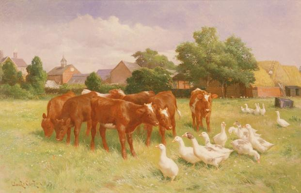 Cows and Ducks