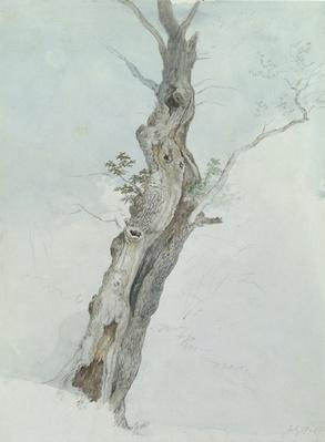 Tree Study, c.1800-05