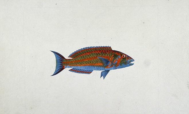 A Fish, El Hudderi Imbo