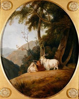 Kashmir Goats, c.1780-1820