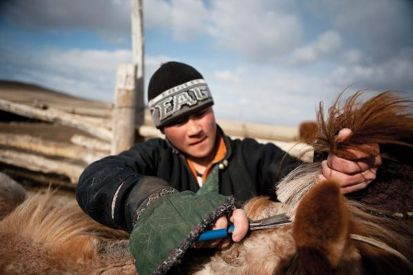 Young Herder Trims the Horse Mane | Global Oneness Project