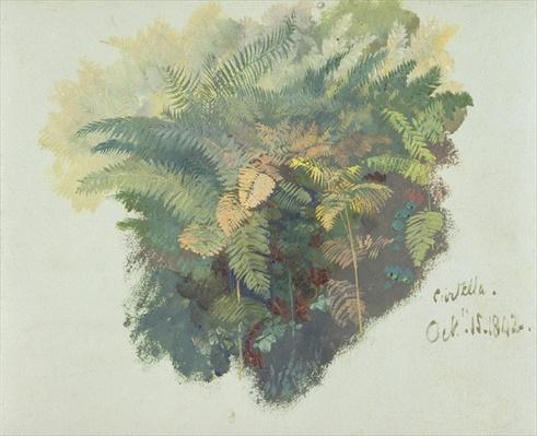 A Study of Ferns, Citivella, 1842,