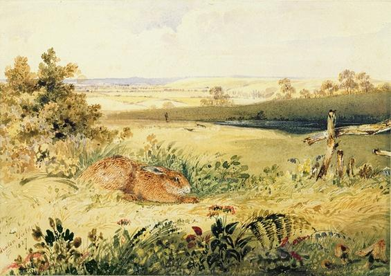 Hare in a Landscape, 1827