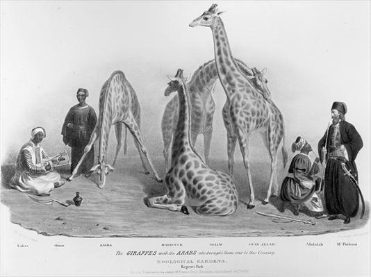 The Giraffes with the Arabs who brought them over to this country, Zoological Gardens, Regent's Park, 1836