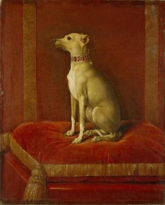 One of Frederick II's Italian greyhounds