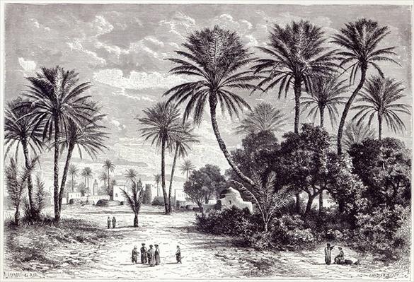 Oasis of Gafsa: Tunis