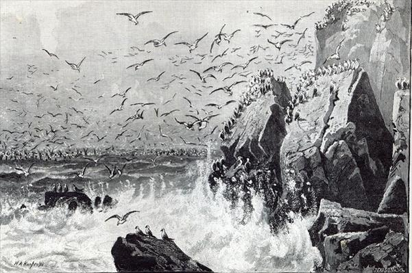 The Haunt of the Gulls, from 'Leisure Hour', 1888