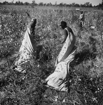 Cotton Picking | African-American History