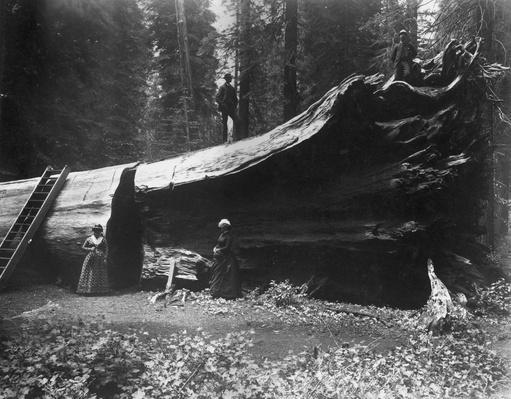 Fallen Hercules | The Wild West is Tamed (1870-1910) | U.S. History