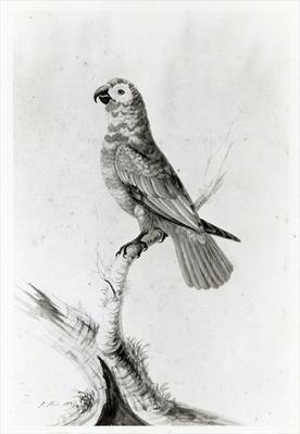 A Parrot, 1786