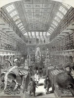The Hunterian Museum, at the Royal College of Surgeons, from 'The Illustrated London News', 4th October 1845