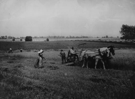 Reaping Wheat | The Wild West is Tamed (1870-1910) | U.S. History