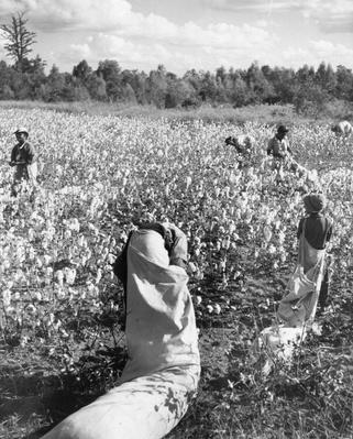 Cotton Pickers | African-American History