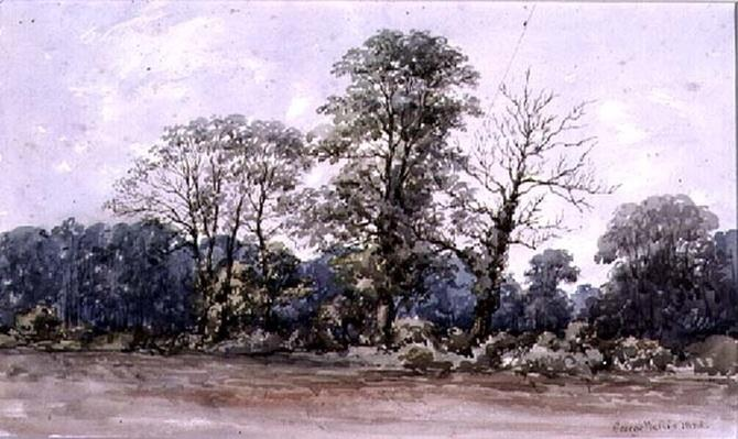 Trees at Perry Bar near Birmingham, 19th century