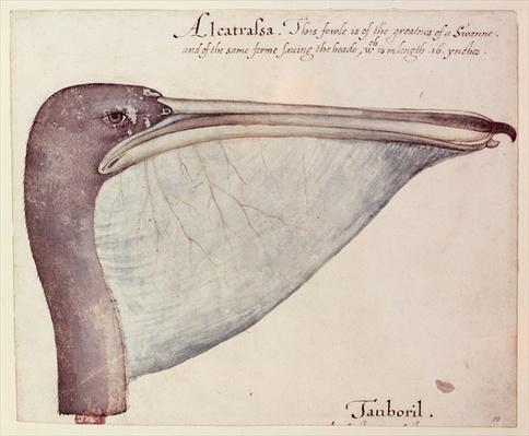 Pelican, c.1590