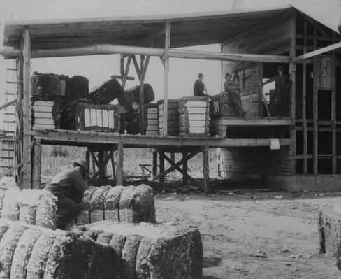 Cotton Bales | African-American History