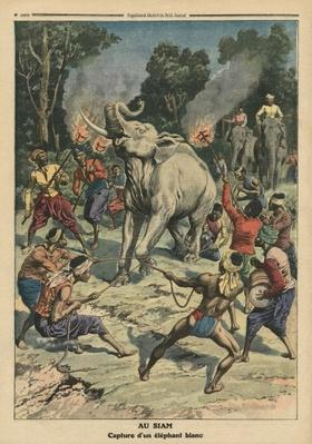 Catching a white elephant in Siam, illustration from 'Le Petit Journal', supplement illustre, 10th September 1911