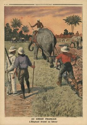 In French Congo, elephant trained to ploughing, illustration from 'Le Petit Journal', supplement illustre, 15th January 1911