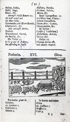 Plant Husbandry from 'Orbis sensualism pictus' by Johann Amos Comenius, published c.1689