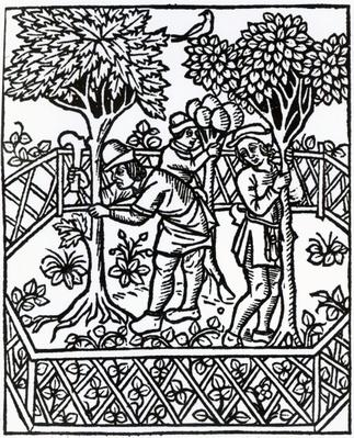 Tending Vines from 'Livre des prouffits champetres' by Petrus de Crescentiis, edition published in 1529