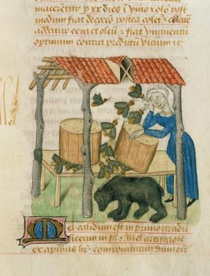 Ms 'Tractatus de Herbis' by Dioscorides, fol.92r Collecting Honey