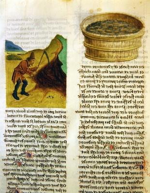 Ms. 'De Diversis Herbis' by Dioscorides, fol.8r Seeds in a Tub and Searching for Gentian Tubers