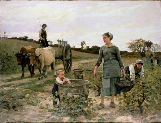 Corner of a Vineyard, Languedoc, 1886