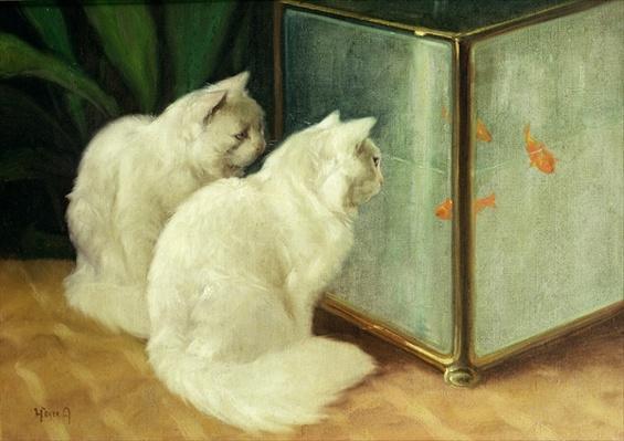 White Cats Watching Goldfish