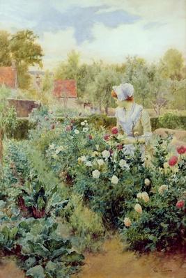 Dahlias, 1896