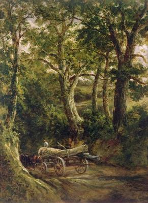 Gathering Timber
