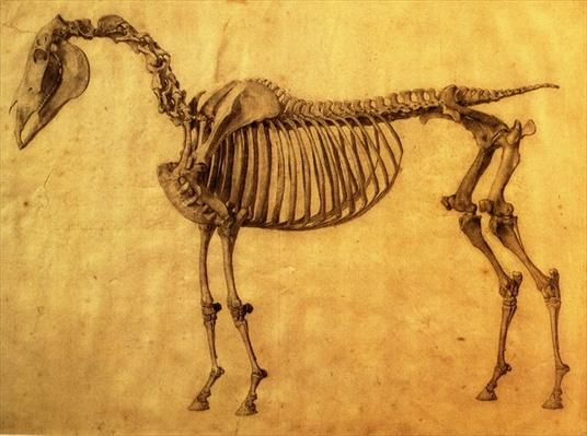 Finished Study for the First Skeletal Table of a Horse, c. 1766