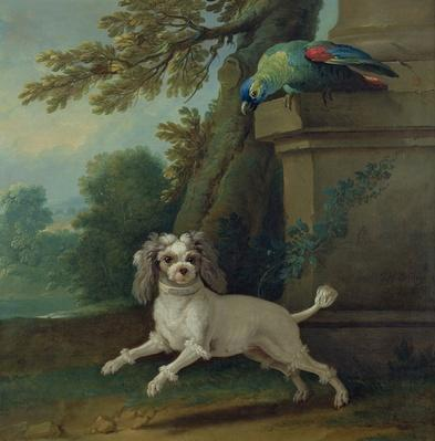 Zaza, the dog, c.1730