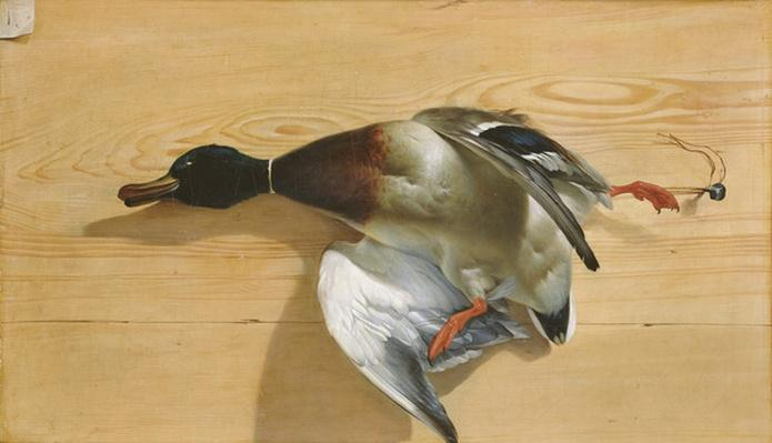 A duck on a pine board, 1753