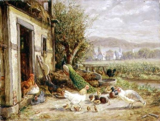 Chickens, Ducks and a Peacock by a Canal