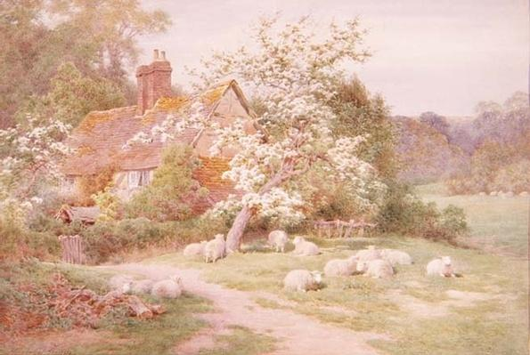 Sheep outside a cottage in Springtime