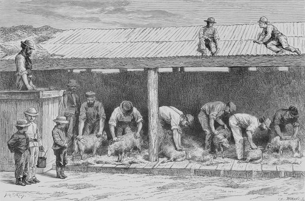 Sheep Shearing, c.1880, from 'Australian Pictures' by Howard Willoughby, published by the Religious Tract Society, London, 1886