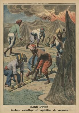 Catching, packing and sending snakes, India, back cover illustration from 'Le Petit Journal', supplement illustre, 20th April 1913